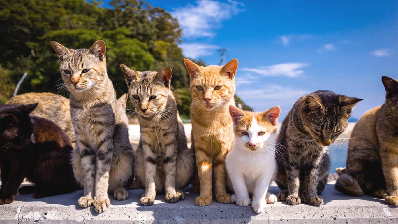 Jenis Kucing dan Harganya