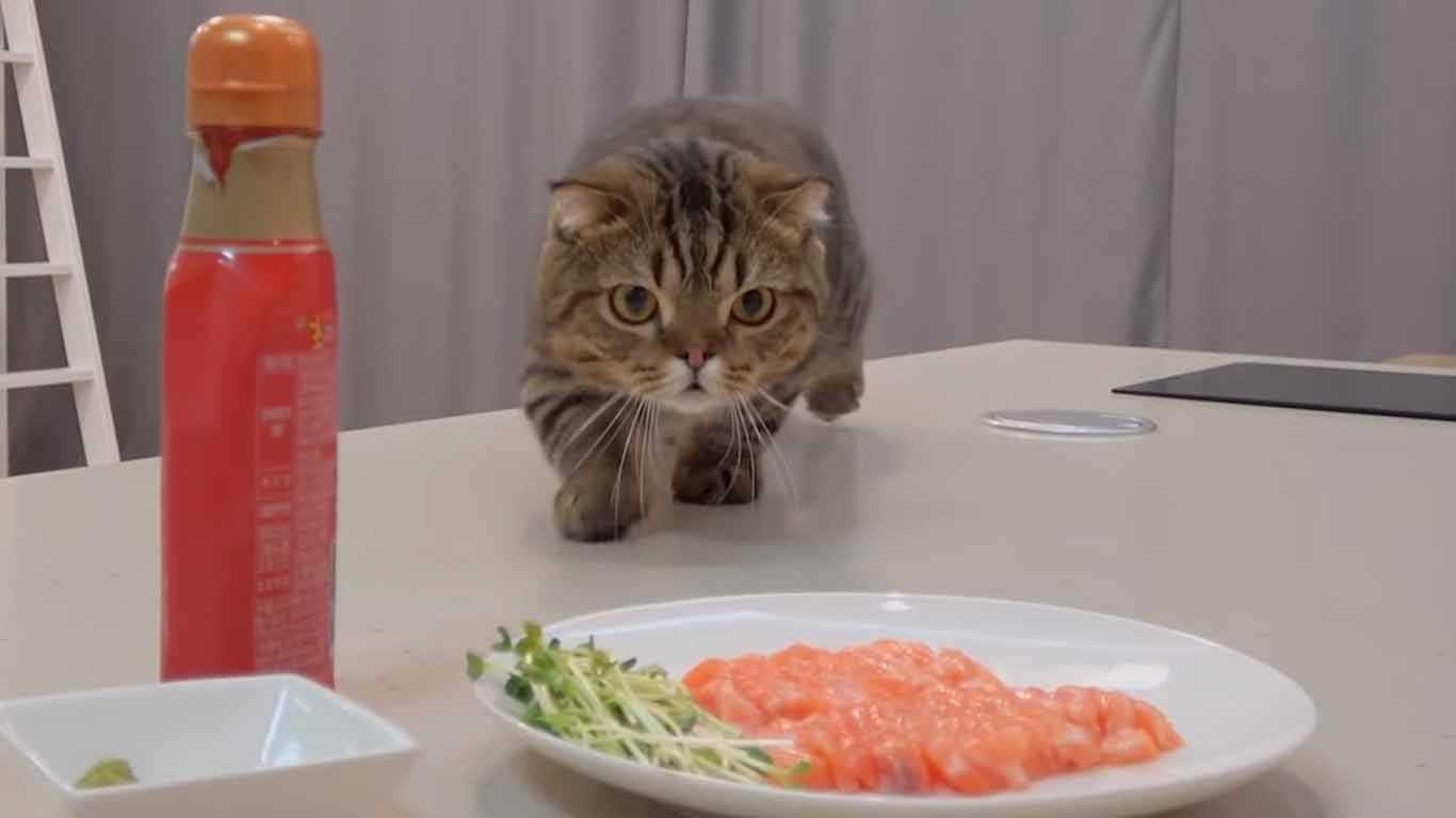 Kucing Anggora Makan