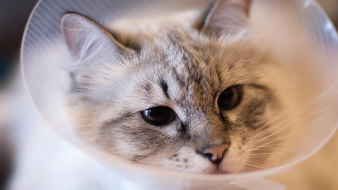 Mata Kucing Berair
