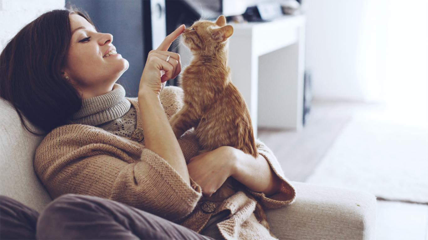 Menenangkan si Kucing setelah Mandi