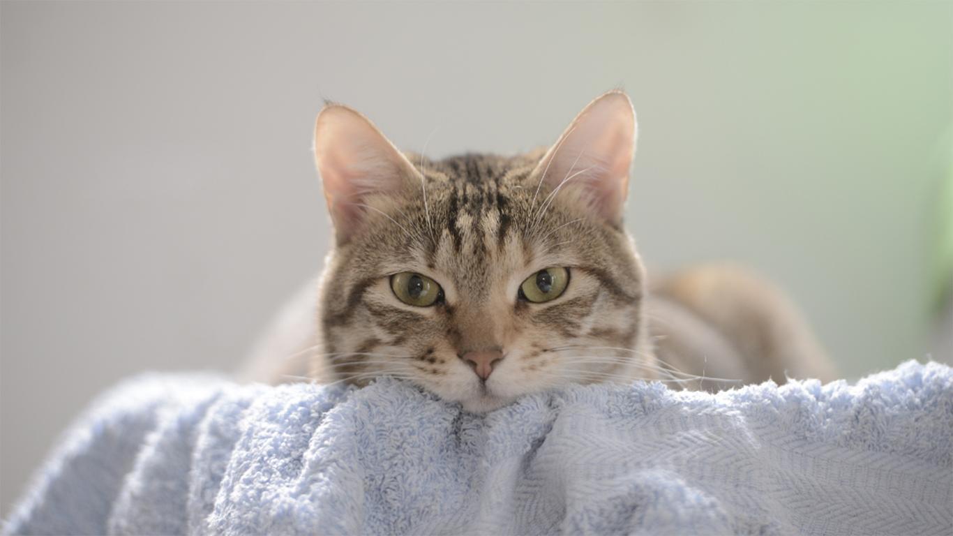 Mengeringkan si Kucing