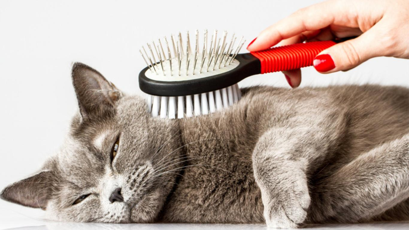 Take care of cat hair