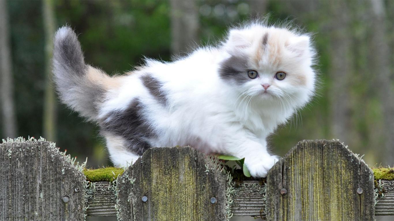 39 Daftar Jenis Kucing Yang Populer Di Dunia Lucu Banget