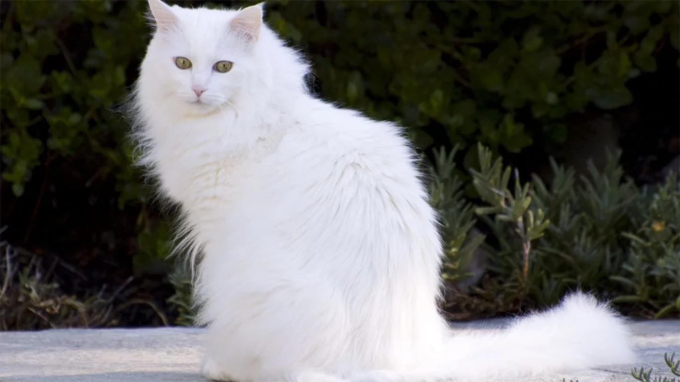 Tubuh si kucing