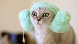 cara memandikan kucing yang benar