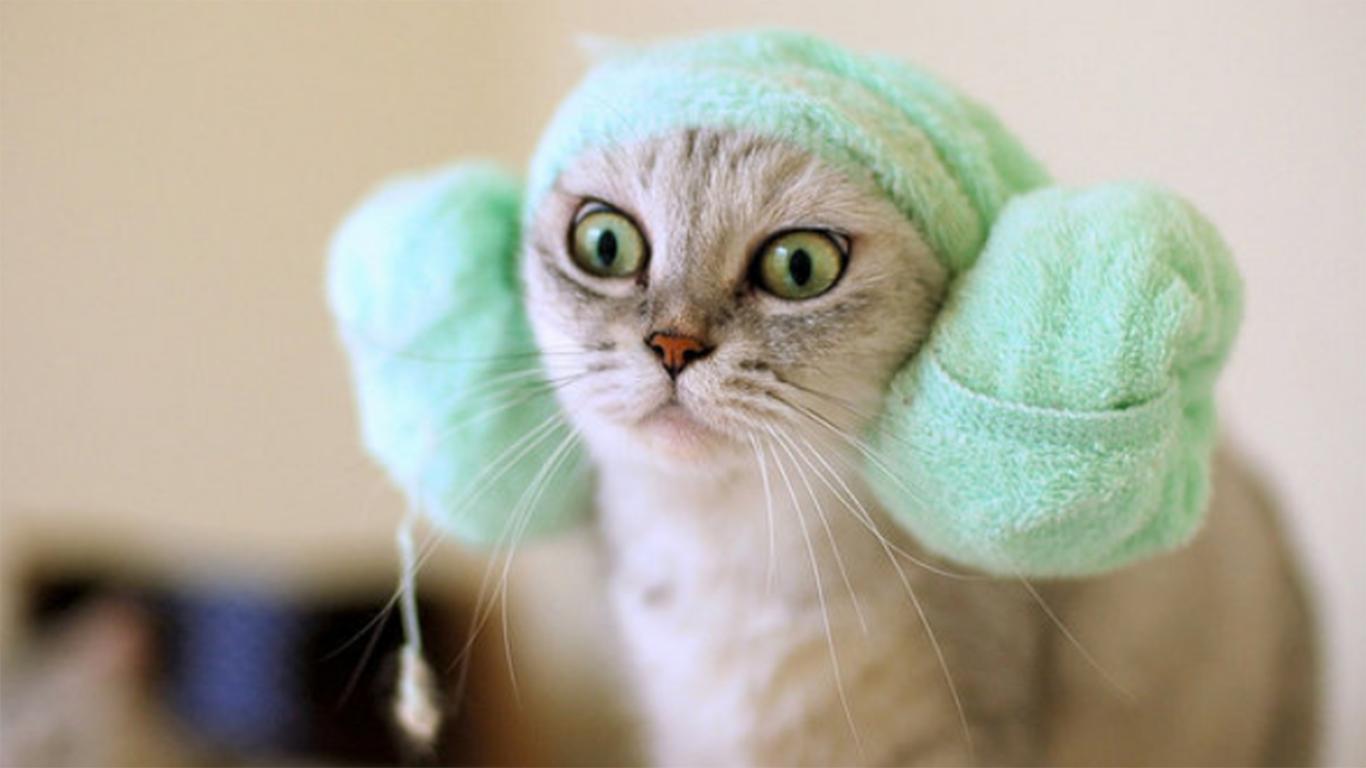Cara Memandikan Kucing