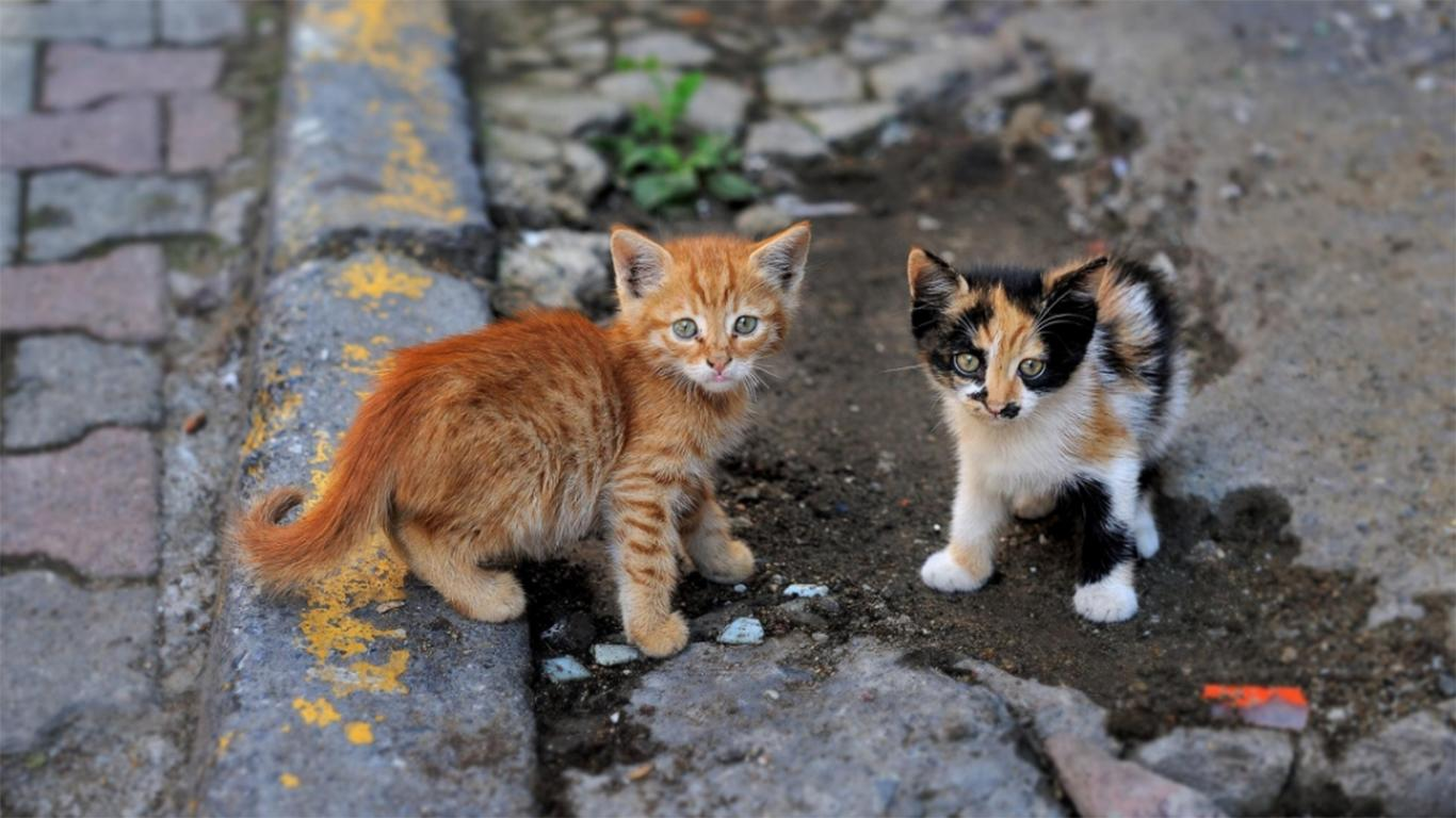 how to get rid of stray cats