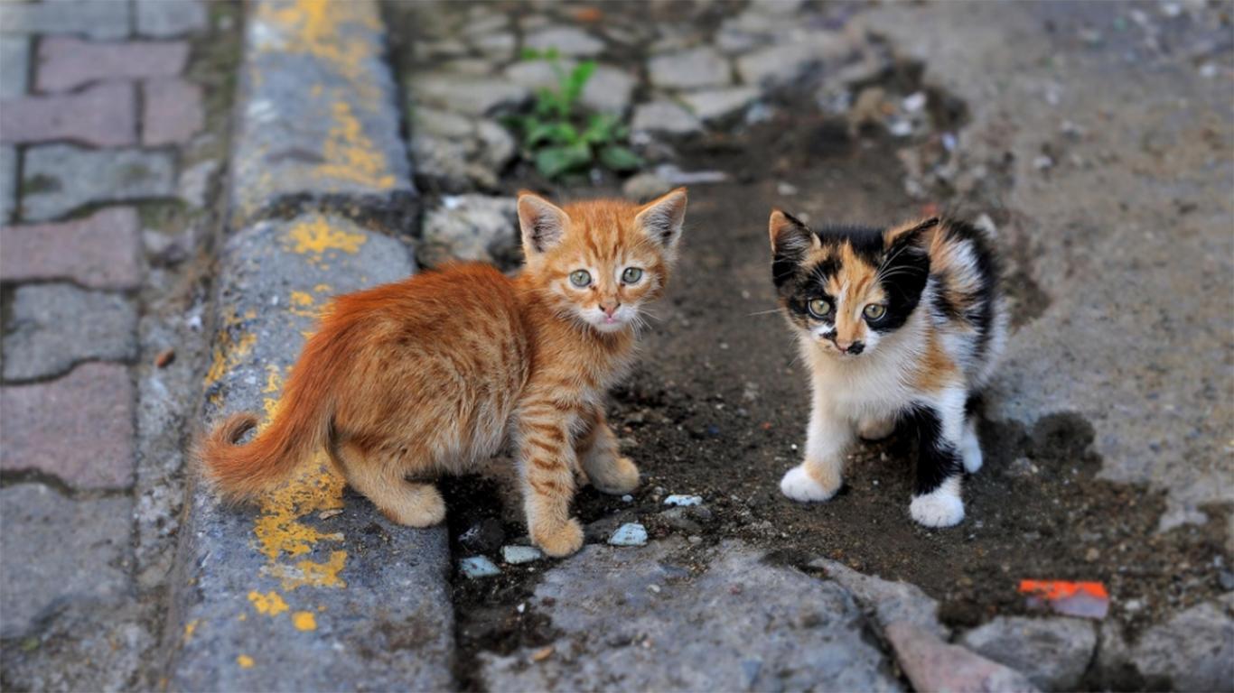 cara mengusir kucing liar
