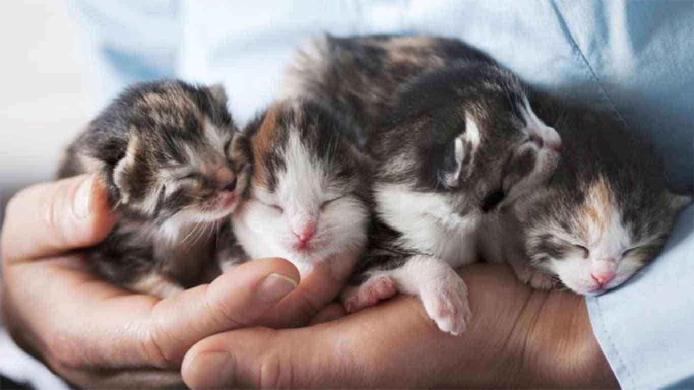 kesehatan anak kucing