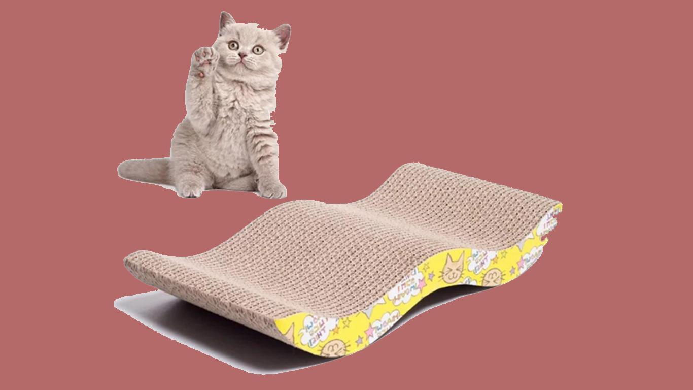 mainan anak kucing