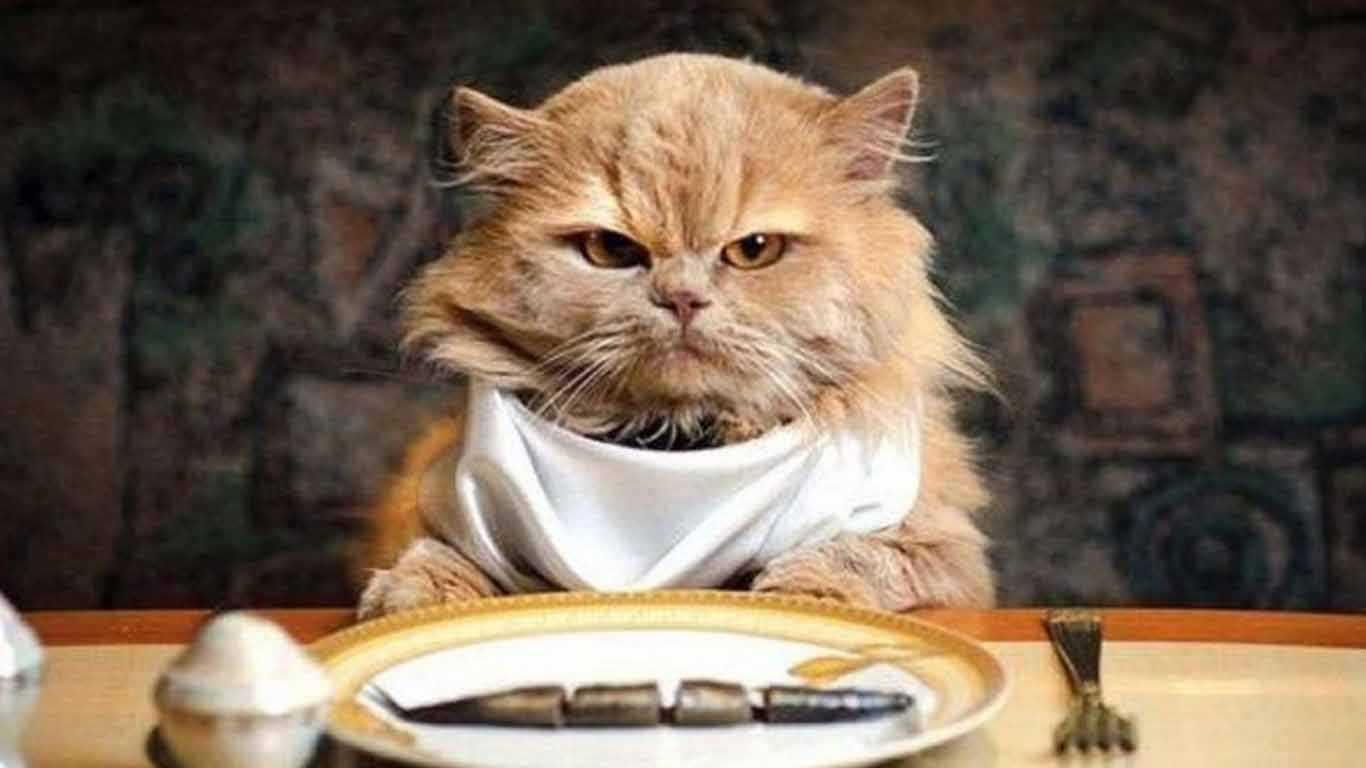 Makanan & Minuman Kucing Kampung
