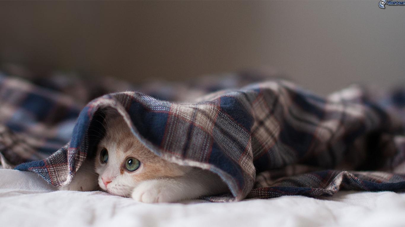 obat mata kucing berair