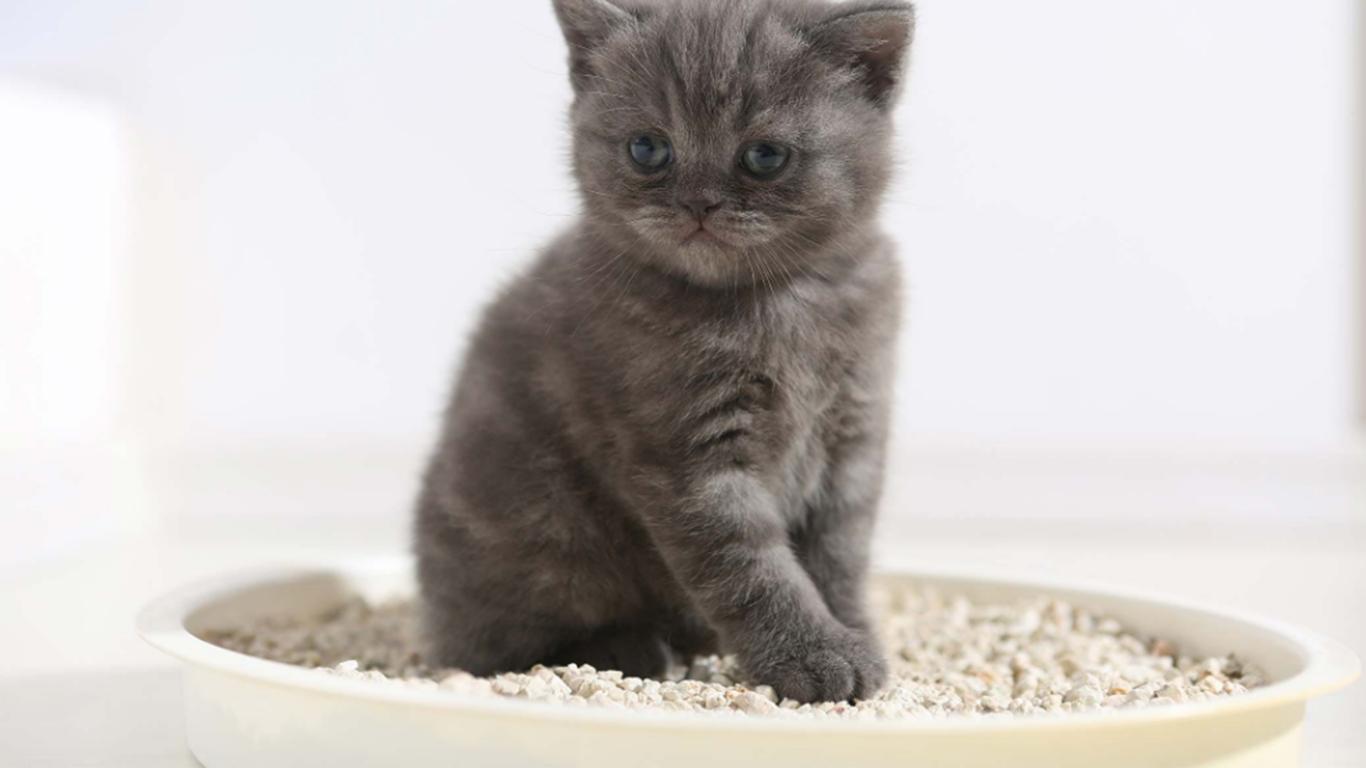 pasir untuk kucing