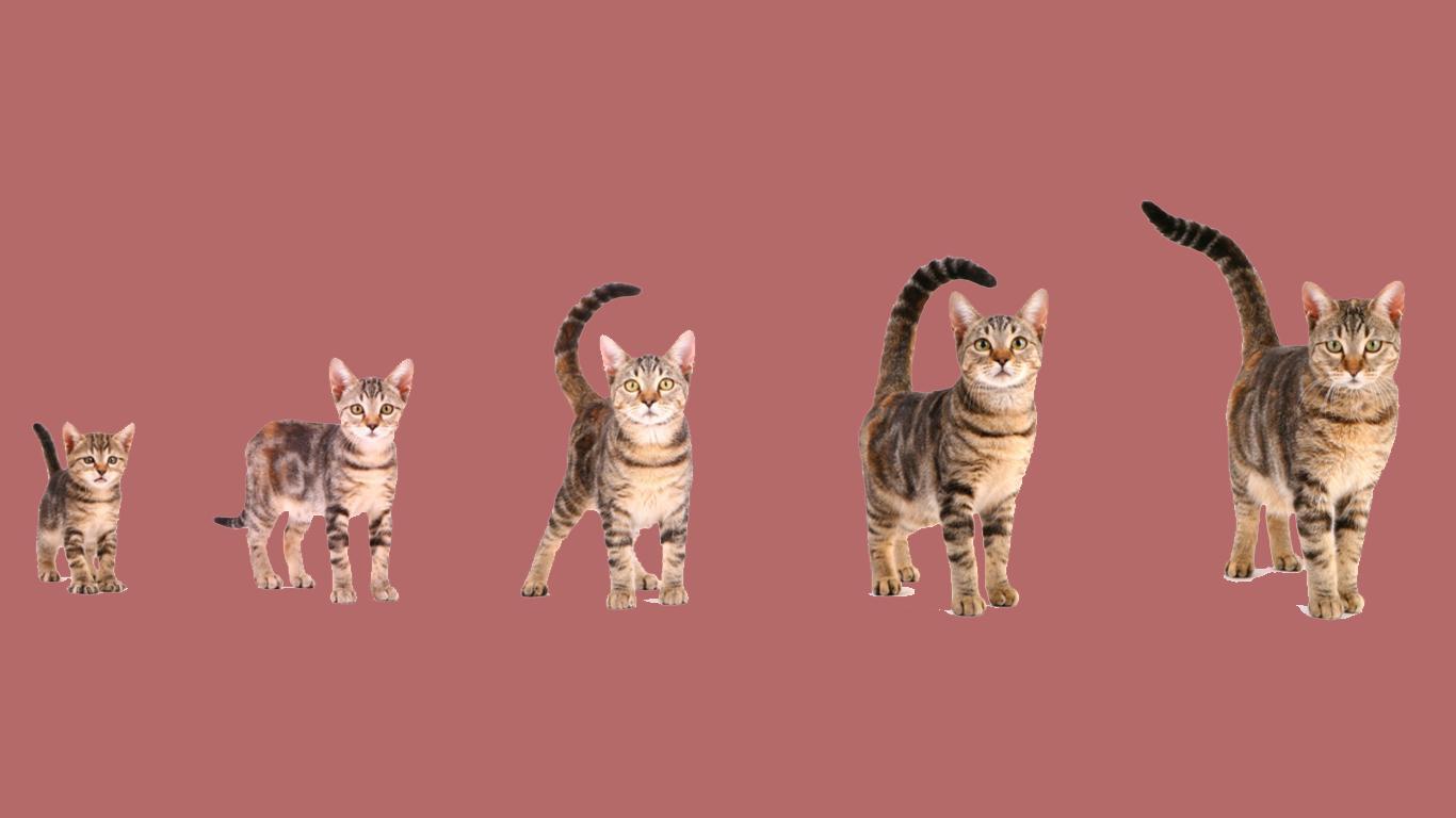 rata rata umur kucing