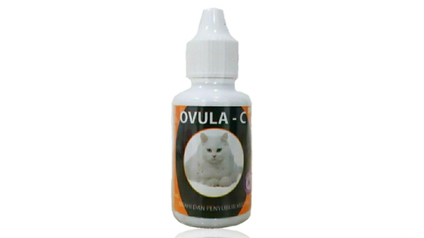 vitamin kucing agar gemuk ovula