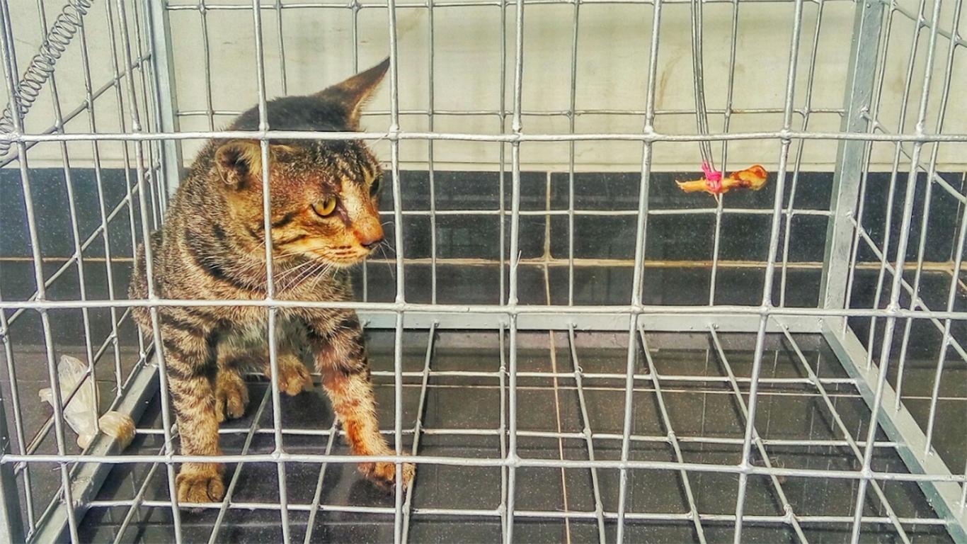 Kandang yang khusus kucing liar