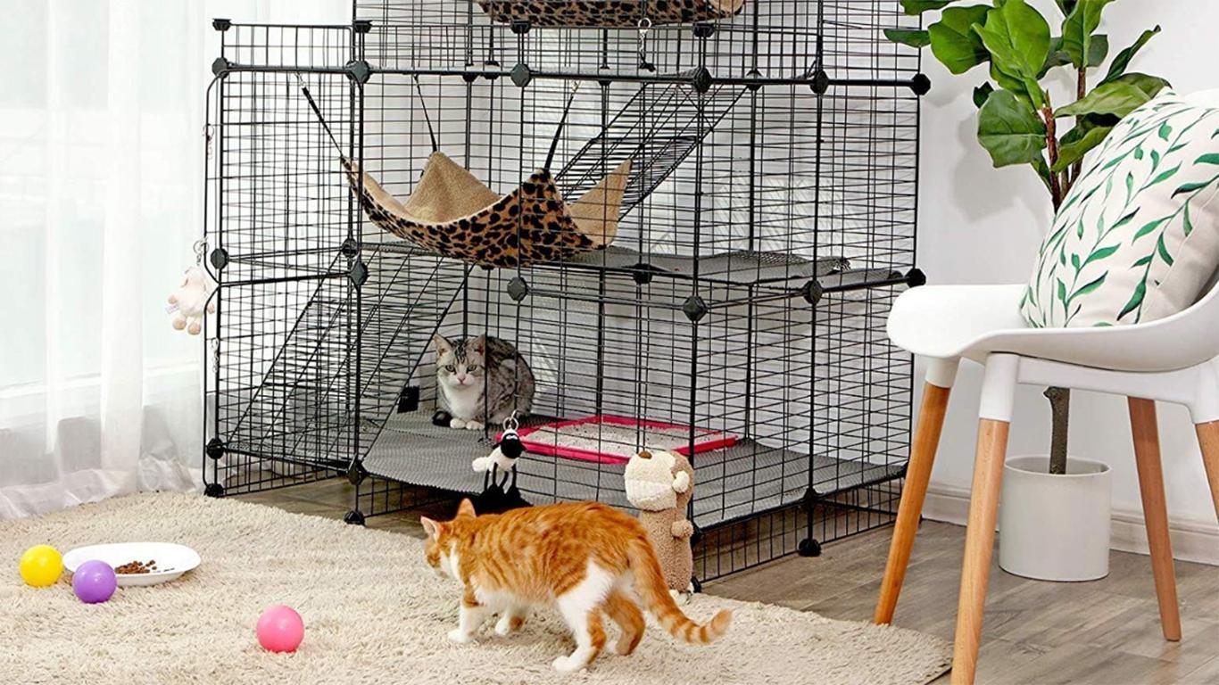 Kebersihan tempat tinggal anak kucing