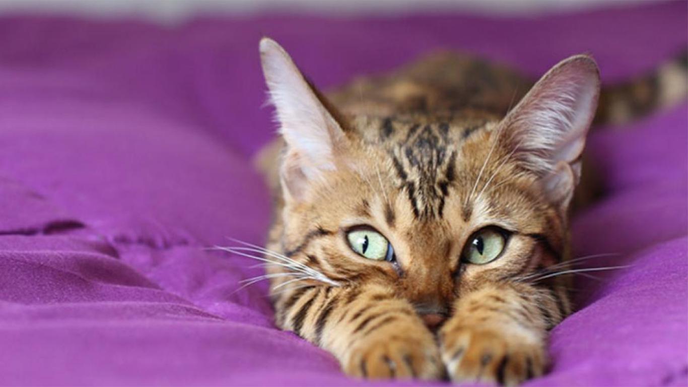 Kucing Tidak Mau Makan karena stress