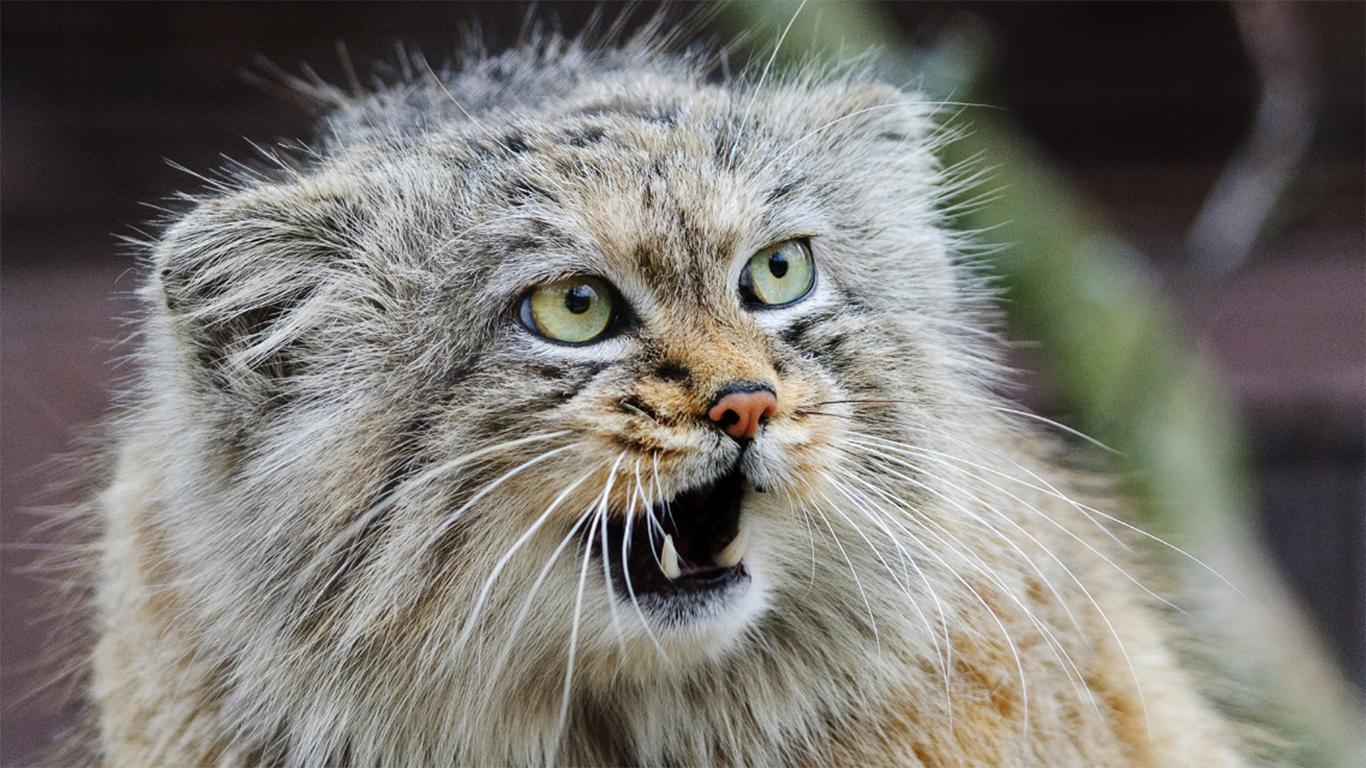 bahasa tubuh kucing liar