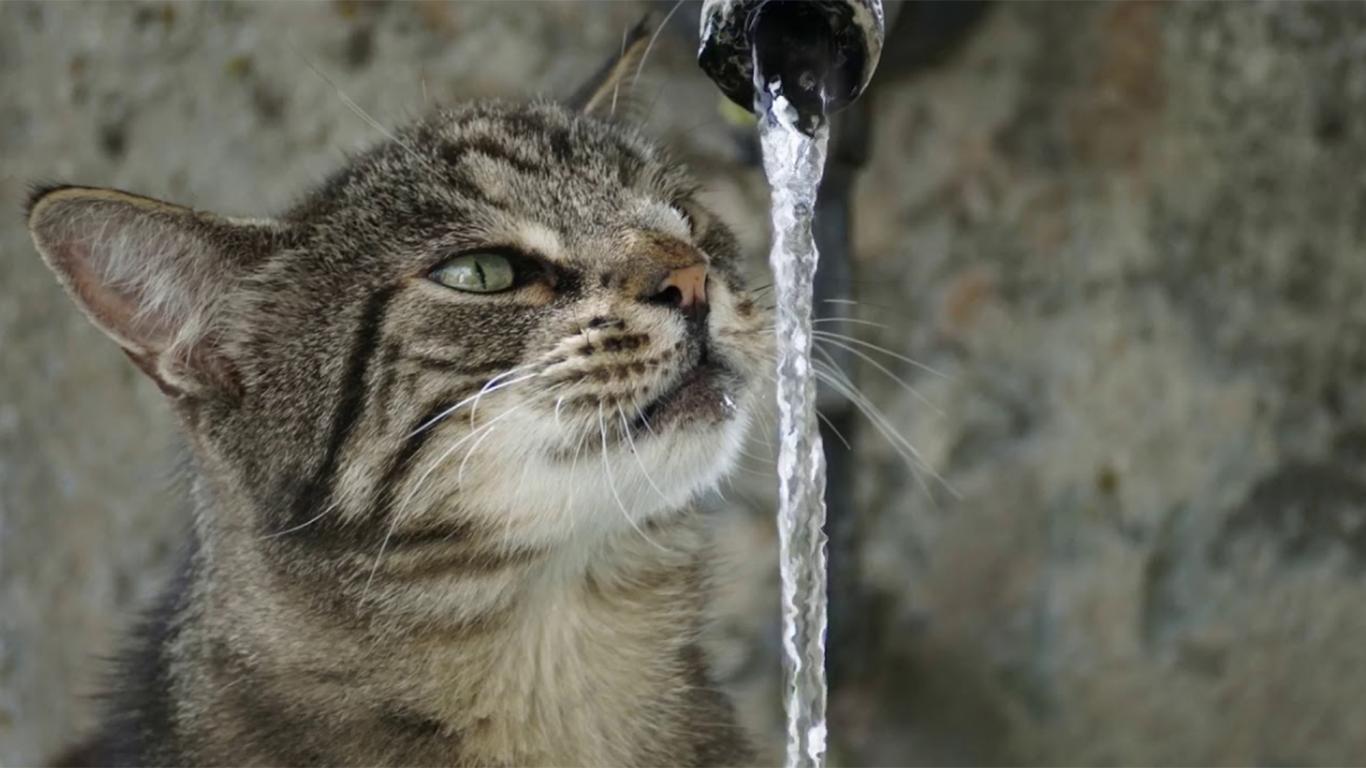 cara merawat kucing dengan memberi air