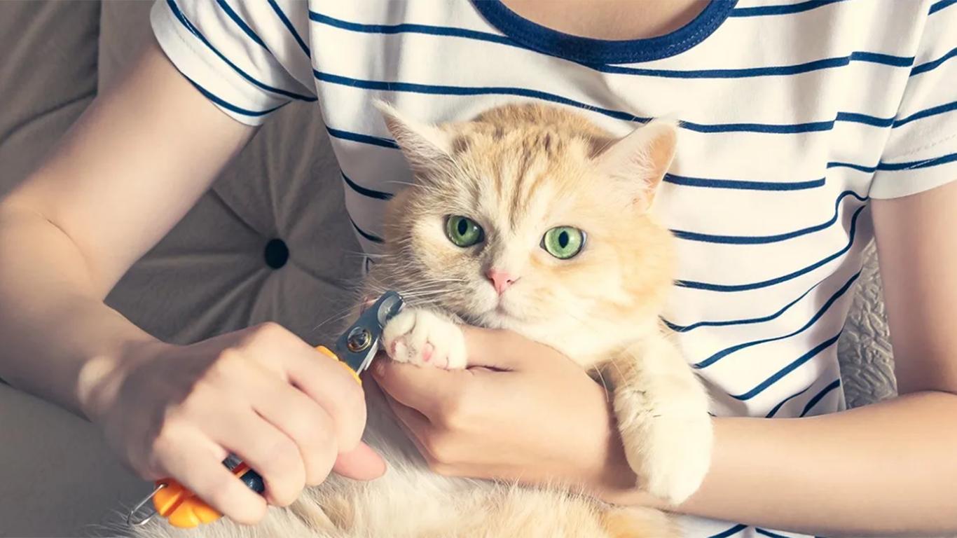 memotong kuku kucing