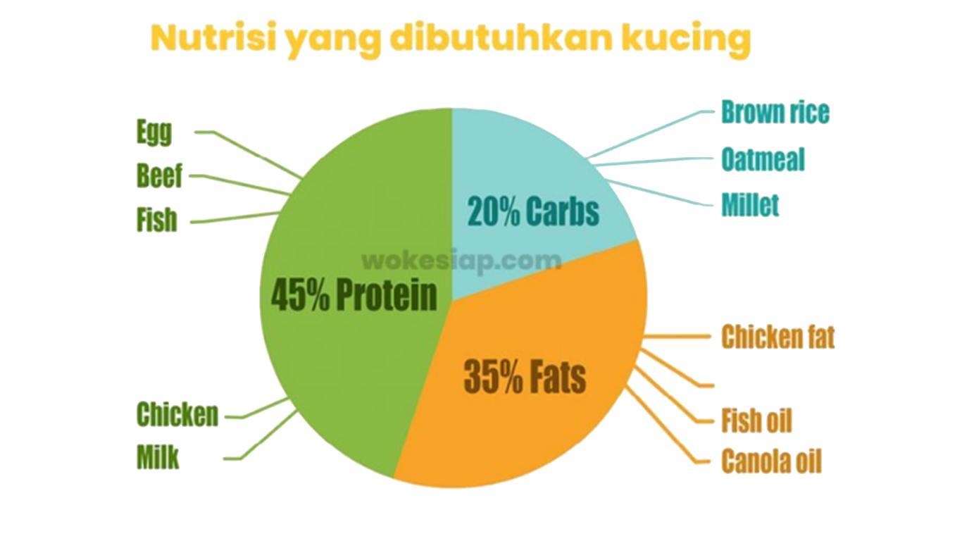 nutrisi makanan kucing