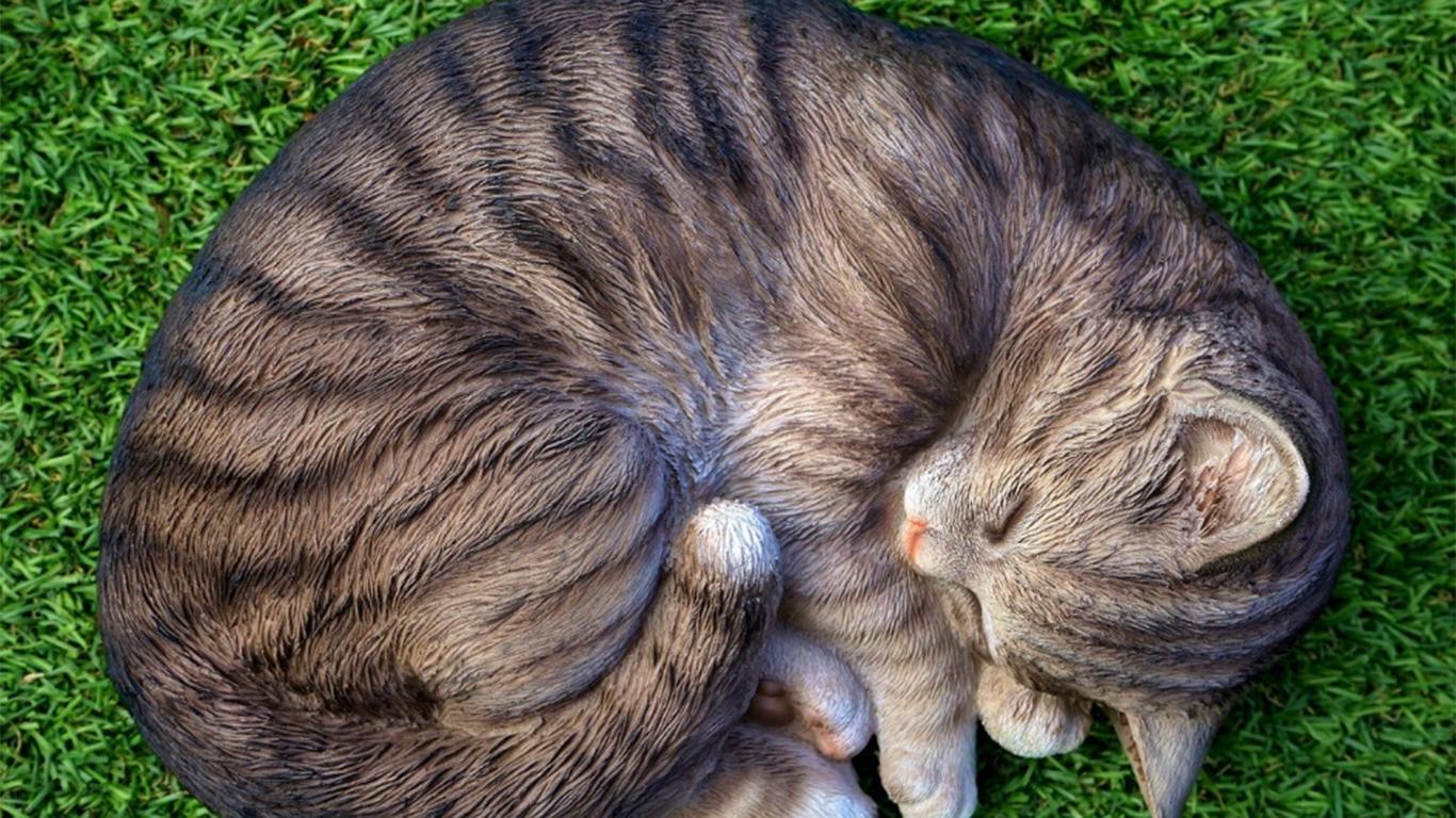penyebab kucing yang tidak mau makan