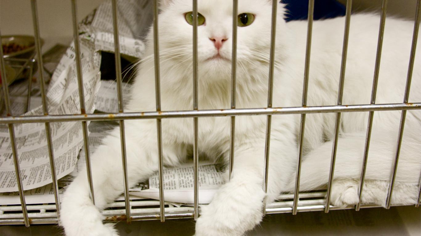 Memisahkan kandang kucing