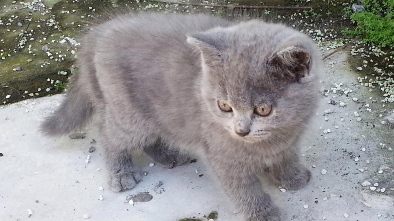 4 Cara Mengetahui Umur Kucing Siklus Hidupnya