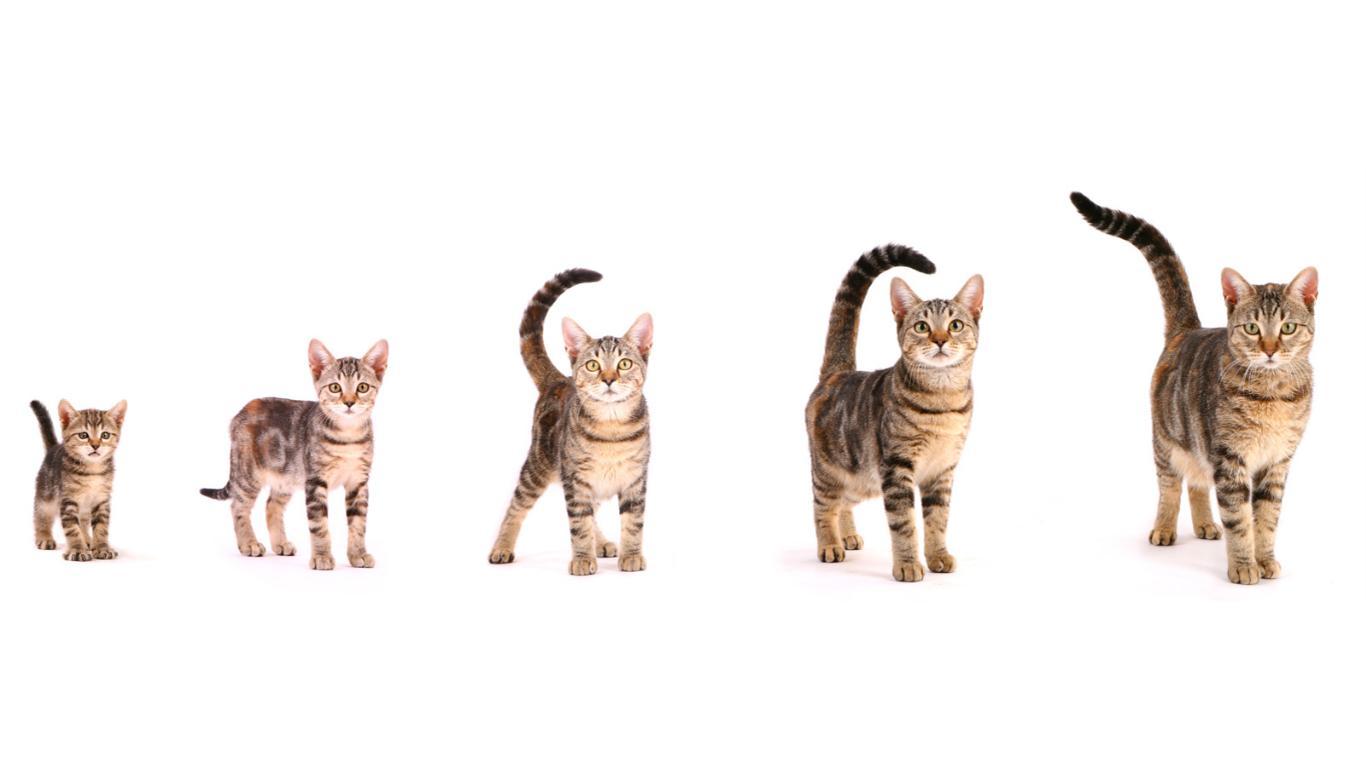 Sesuaikan dengan Usia Kucing