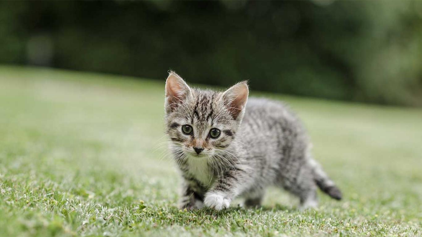 Vitamin Anak Kucing