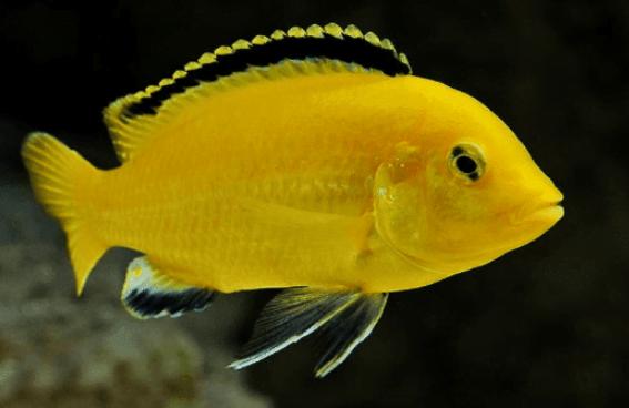 Oscar Lemon