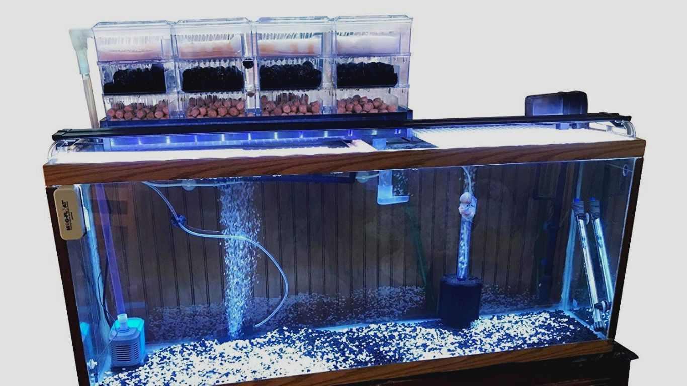 akuarium yang bersih