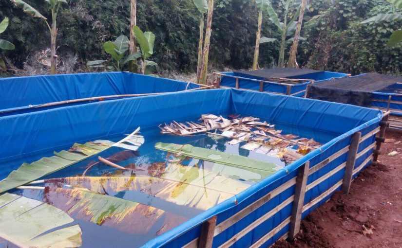 kolam terpal pemijahan