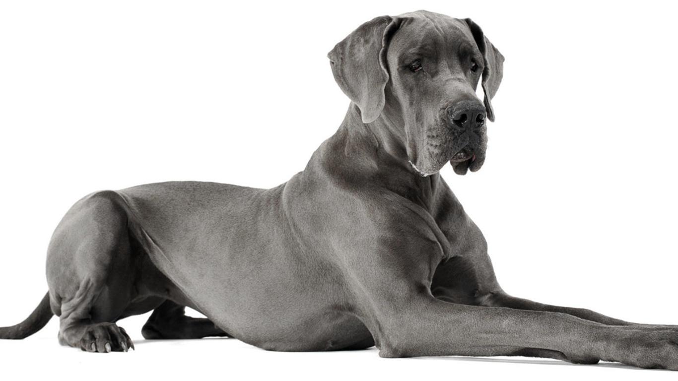 anjing penjaga terbaik