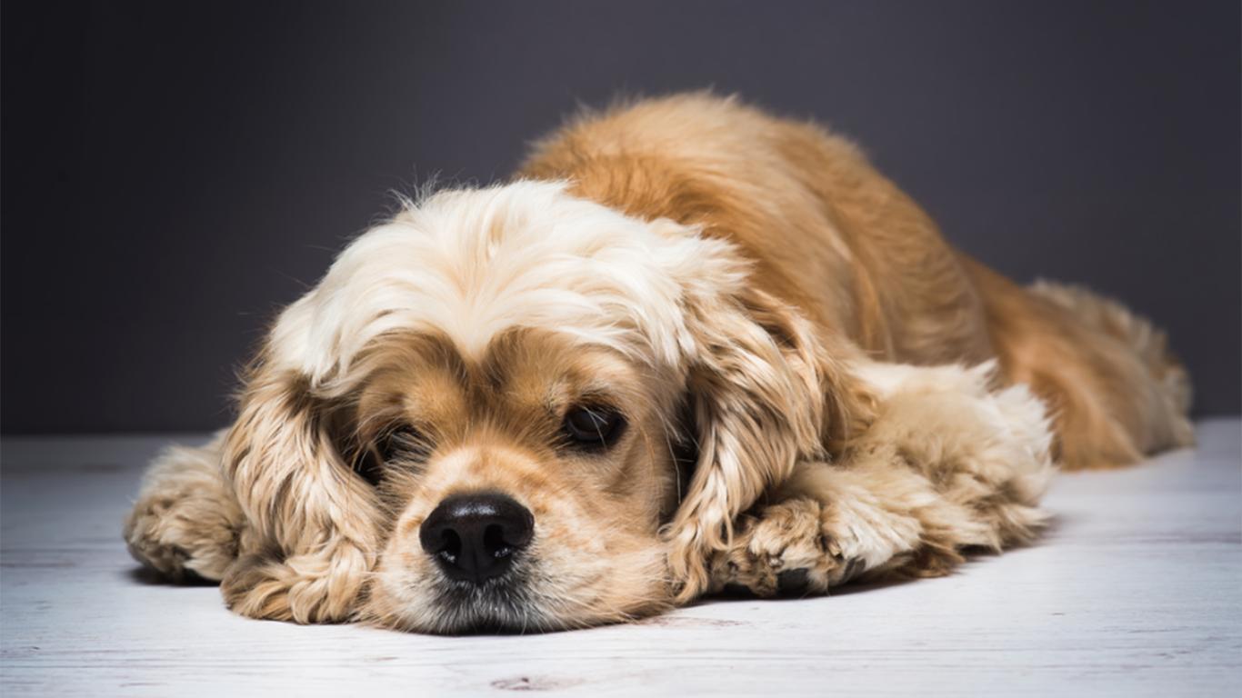 11 Cara Mudah Menghilangkan Kutu Anjing Untuk Pemula