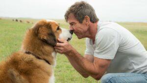 cara merawat anjing