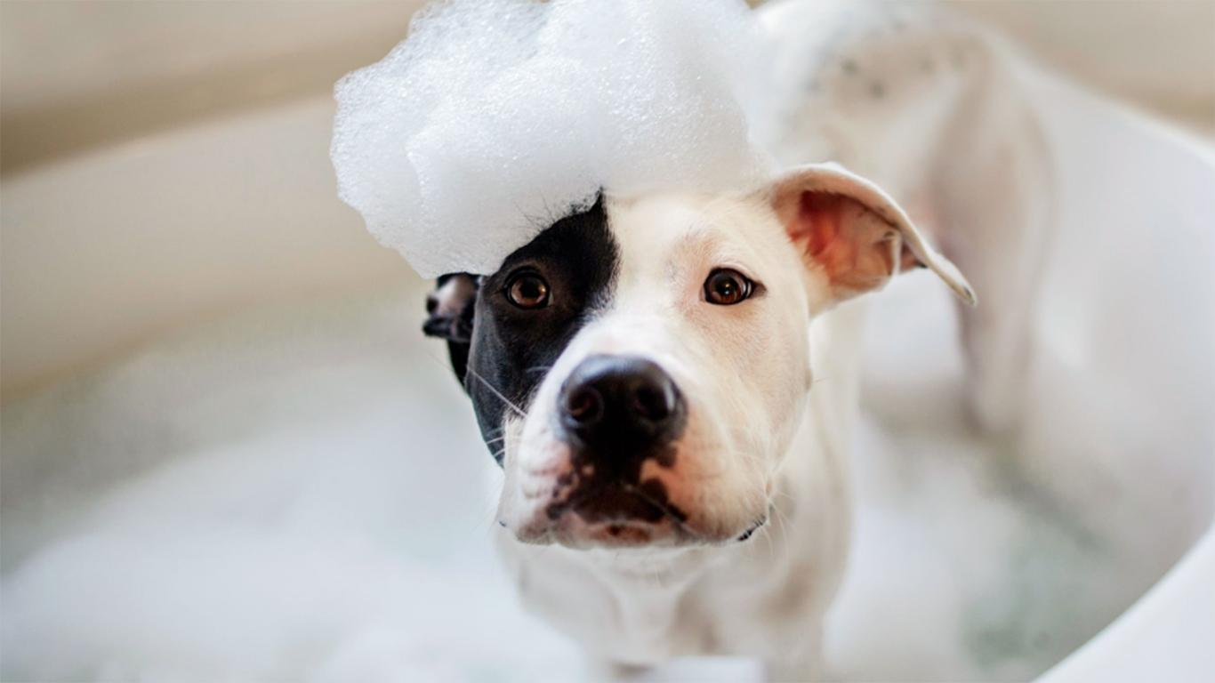 cara merawat anjing kampung