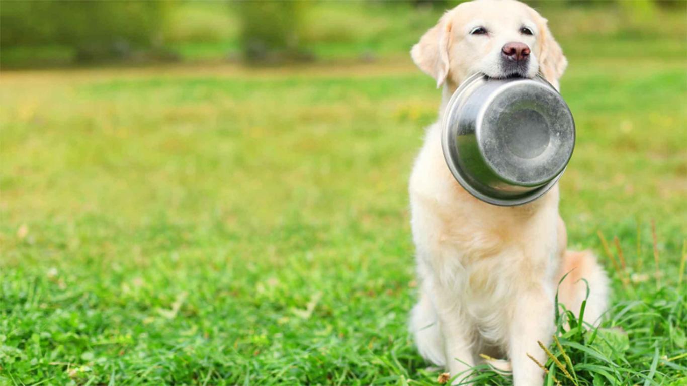 harga makanan anjing