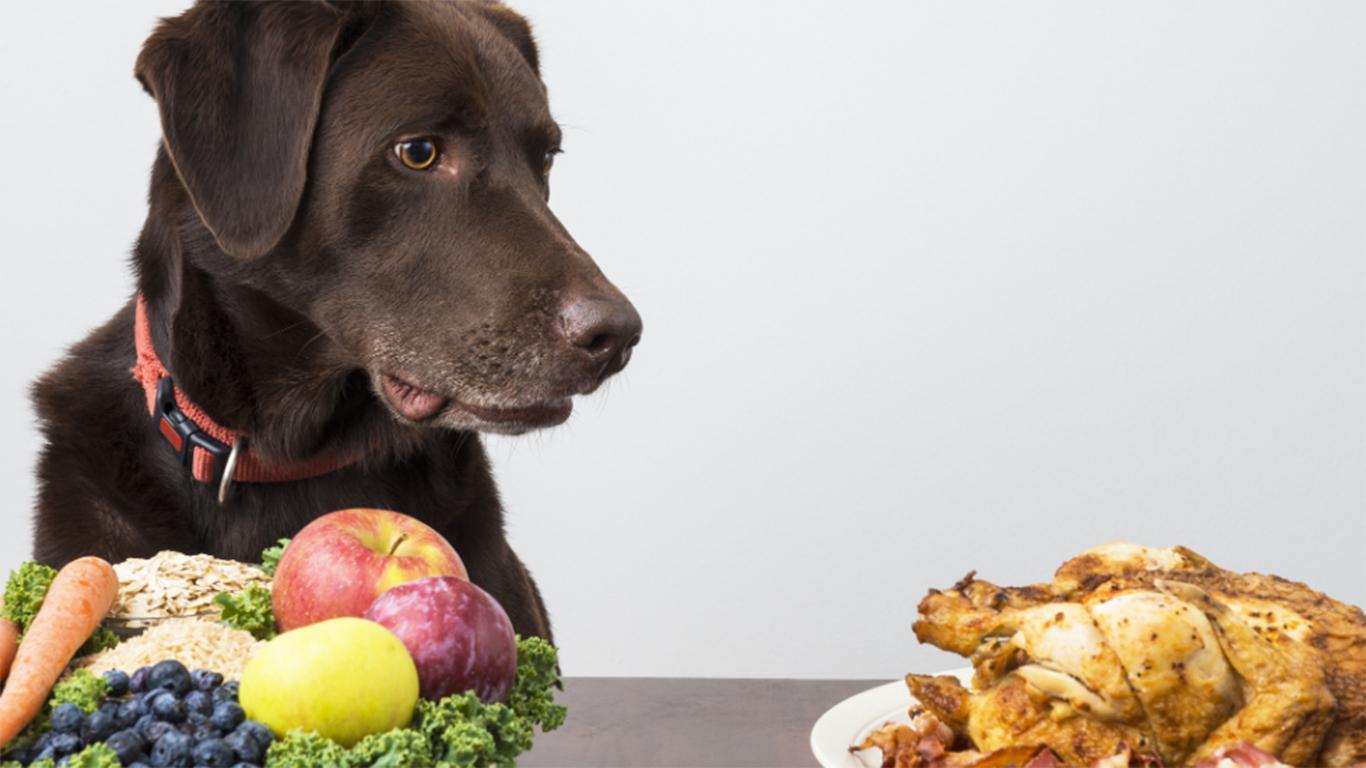 jual makanan anjing