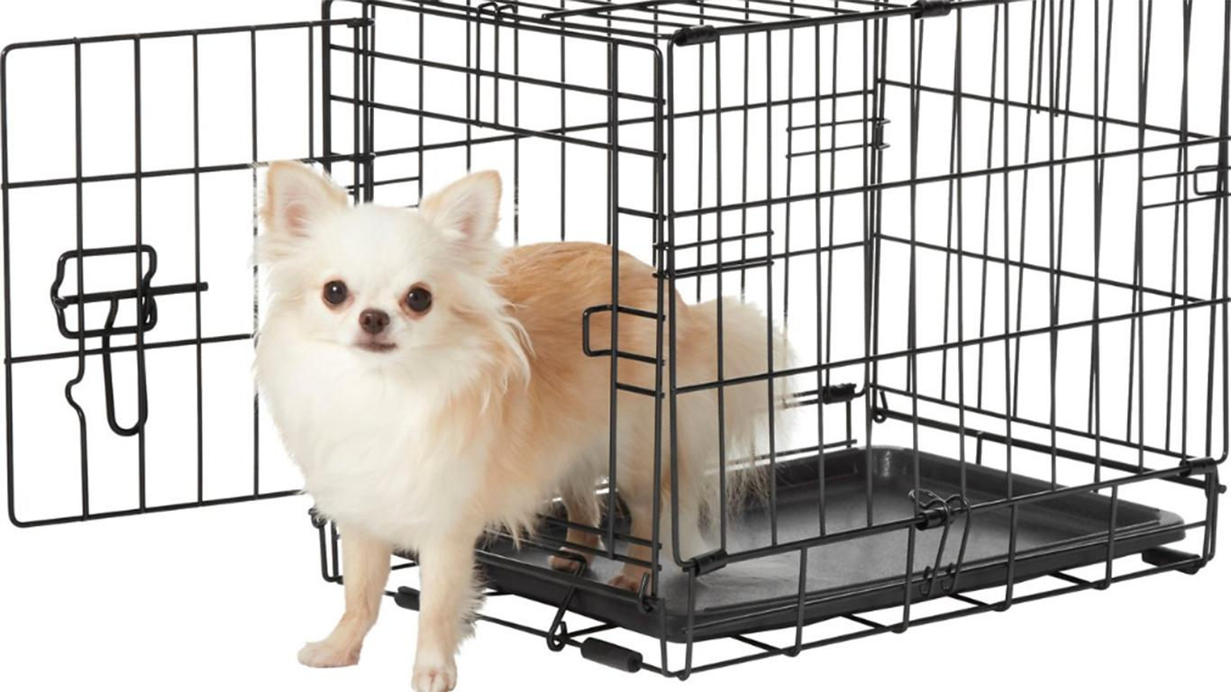 Kandang Anjing