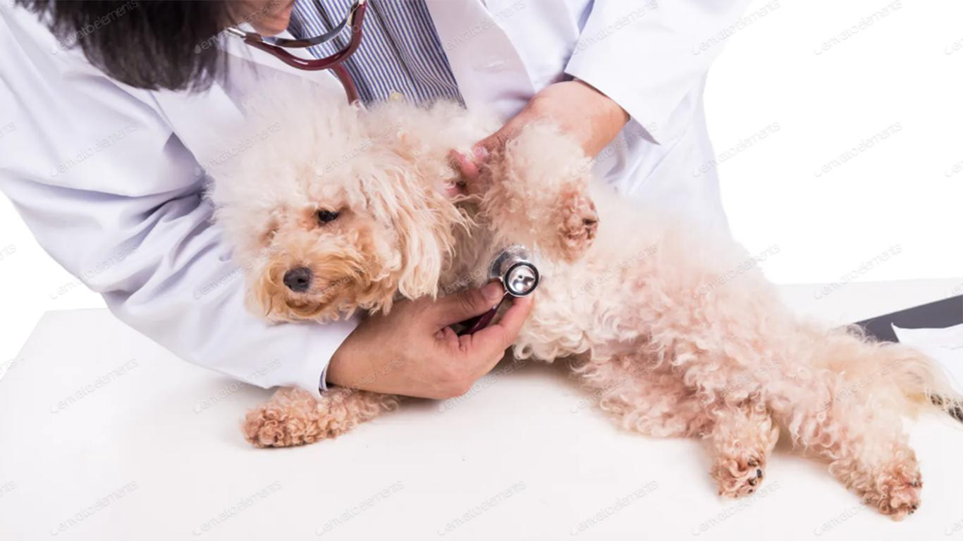 treatment of scabies in dogs