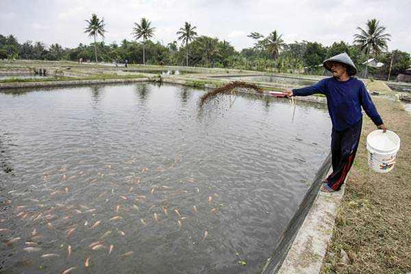 tips budidaya ikan air payau