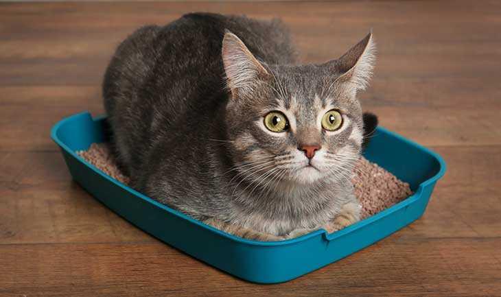 Kucing Mencret