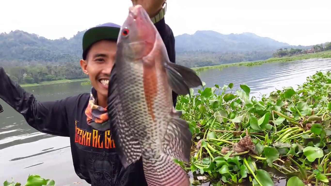10 Racikan Rahasia Umpan Ikan Nila Paling Jitu 2021