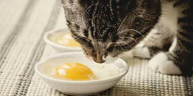 how to treat a sick cat with egg yolk