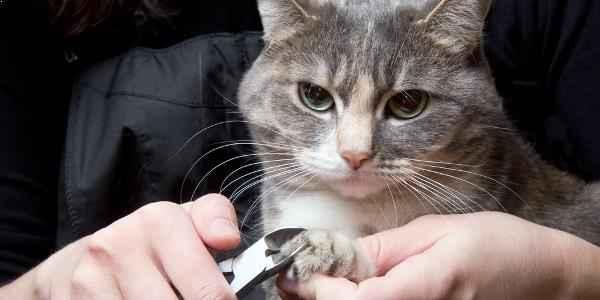 gunting kuku kucing