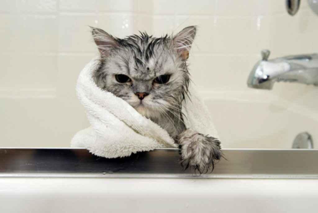 jangan mandikan kucing