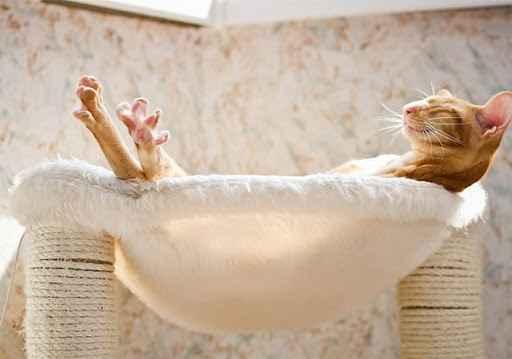 jemur kucing