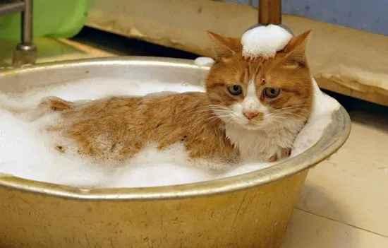 mandikan kucing